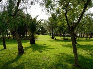 Ilustración 9. Zona Bosque. Fuente: www.turistadespistado.com