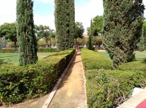 Fig.17: Camino de albero. Fuente: propia.