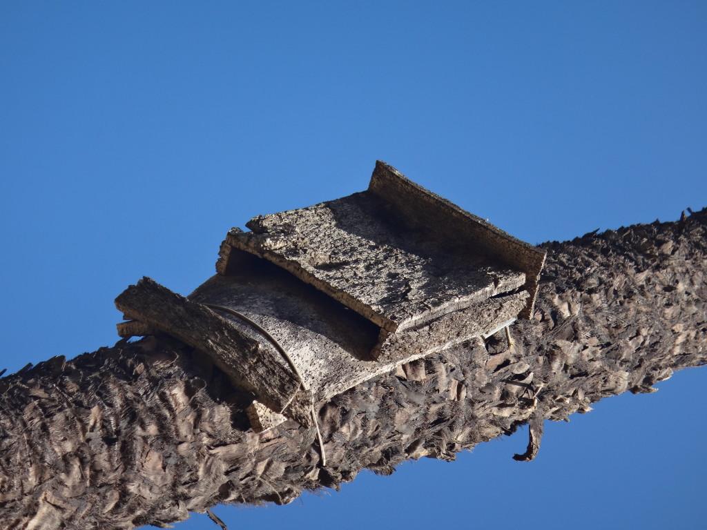 Imagen 29: Refugio para murciélagos en el tronco de una Trachycarpus