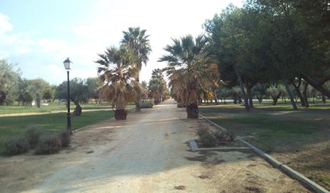 Imagen 25. Sendero entre palmeras. Fuente: Propia.