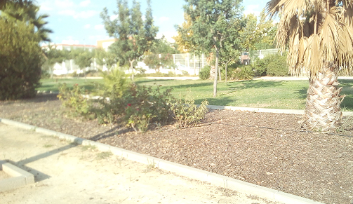 Imagen 14. Jardín con cubierta de cortezas de pinos. Fuente: Propia.