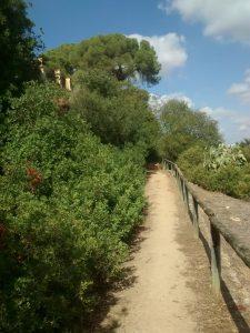 Fig 24. Arbustos ocupando parte del sendero. Fuente: RPDL