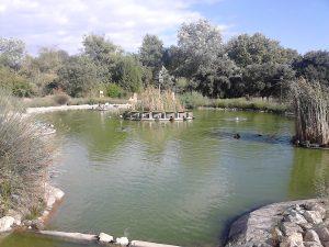 Laguna. Fuente: Propia