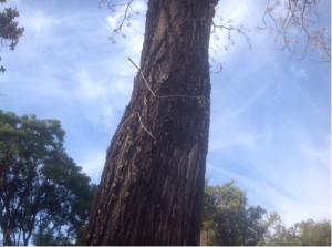 Imagen 18. Daños causados a los árboles.