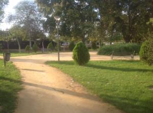 Imagen 9. Coníferas utilizadas como arbusto de forma aislada.