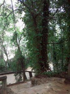 Fig 15. Hiedra enredándose en un tronco. Fuente: RPDL