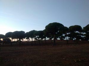 Fig 17. Bosque de pinos al atardecer. Fuente: RPDL