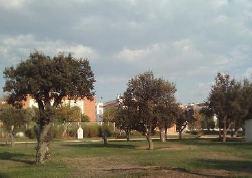 Imagen 7. Jardín de encinas. Fuente: Propia.