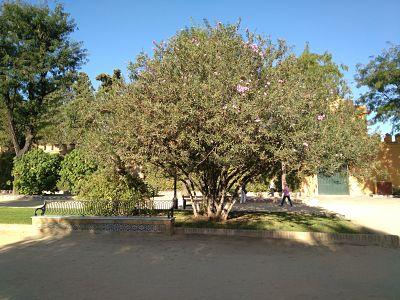 Fig. :árbol de Júpiter. Fuente: propia
