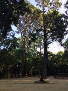 Imagen 11 : Árboles centenarios.