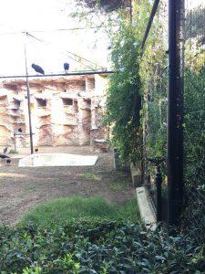 Imagen 31: Aspersor elevado en la zona de los Ibis Eremita.