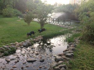 Imagen 11. Curso de agua que llega al estanque. Fuente: propia.