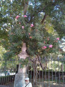 """Imag 5: Balcón del """"coño"""". Fuente : propia"""