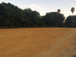 Imagen 9. Vista de la pista de albero. Fuente: propia