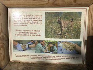 Imagen 22: Programa de recuperación de especies amenazadas, como el Lince Ibérico.