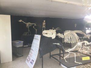 Imagen 20: Taller de osteología.